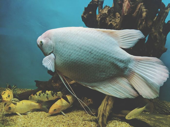 EyeEm Selects Sea Underwater Fish