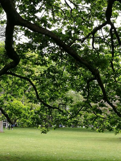 Green Color Tree Nature Growth Beauty In Nature Outdoors Day Newzealand Beauty In Nature Growth Tree Green Color Nature Auckland Branch Leaves🌿
