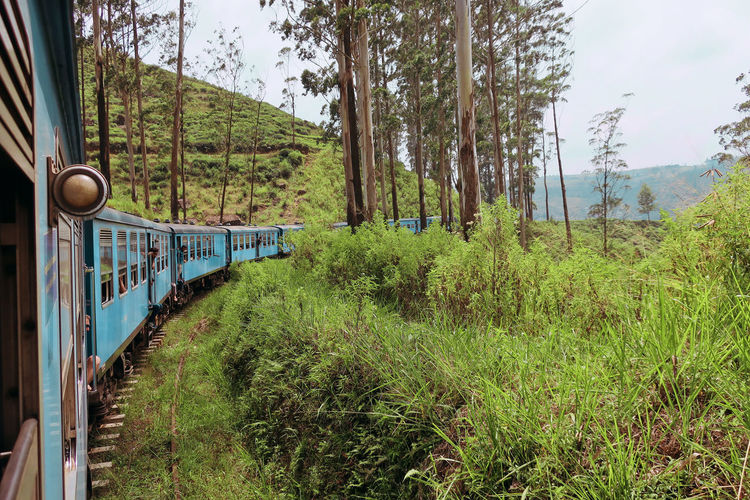 View of train passing through forest