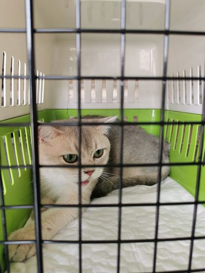 Close-up portrait of a cat in cage