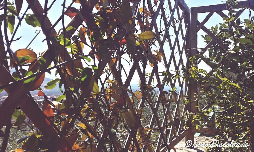 Italy Enjoying Life Sunny Day Feelgoodphoto Naturelovers Likeback Geometric Rombo Beautiful Nature Sky