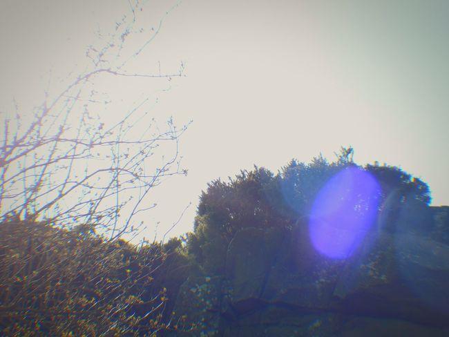 Light Spot Scrabo Tower Newtownards