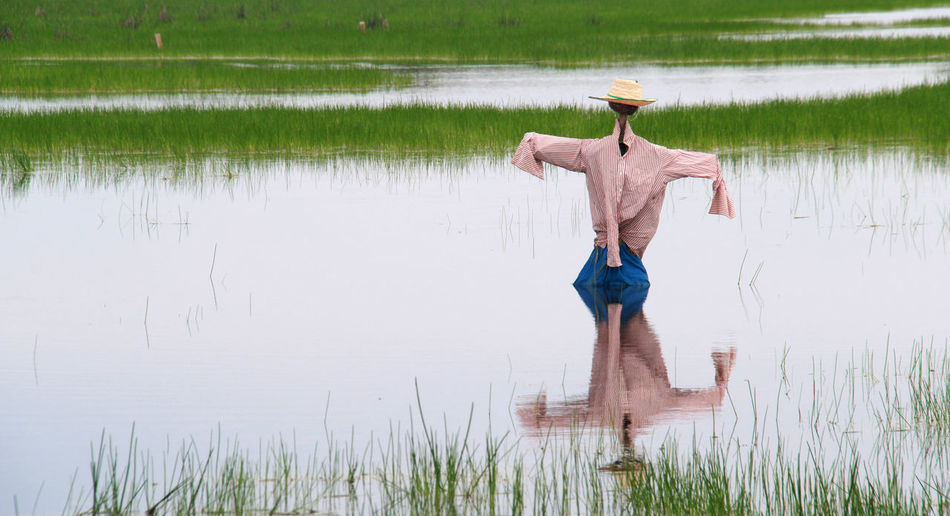 Man standing on field by lake