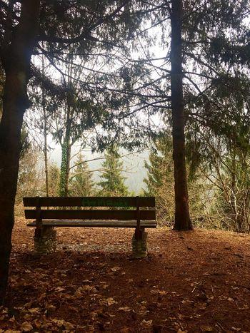 Treat yo mind. Vol. III (winter version) Bench Tree Park - Man Made Space Nature Scenics Tranquil Scene No People EyeEmNewHere