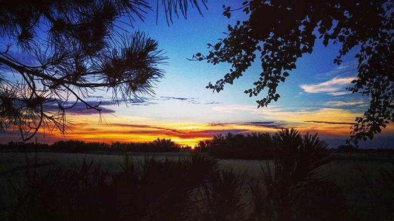 Me fui por las ramas 😆 Sunset Sunsetporn Sky Skyporn Nubesdetuciudad TresArroyos Argentina Atardecer Blue Cloudporn Clouds Instamoment Instagood Picoftheday Photo Photooftheday Photography Farm Farmlife Saturday Vacation Relax Countryside