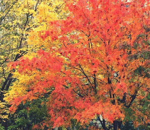 Autumn Colors Autumn Leaves First Eyeem Photo