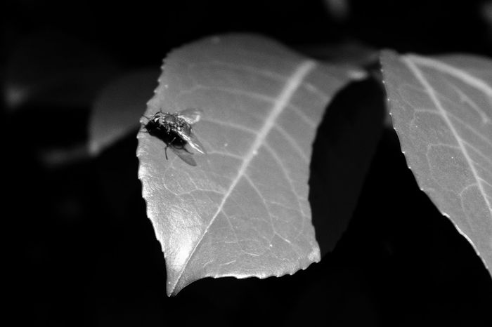 Animal Themes Insect One Animal Animals In The Wild Close-up Animal Wildlife Night No People Outdoors Nature Black Background