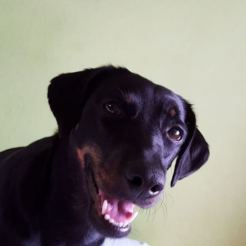 smile😊😊 Dog Dogeyes Dogmodel Doginstagram Instadog Photodog Dogphoto Doginsta Pies Piesinst Bestdogmodel Majapies Maja Dogsofinstagram Ig_dogphot Doglife Doglifestyle Dog_of_instagram Dog_