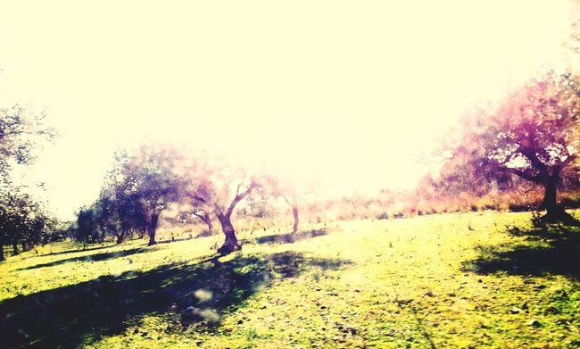 Trees España SPAIN En El Campo Benicarlo