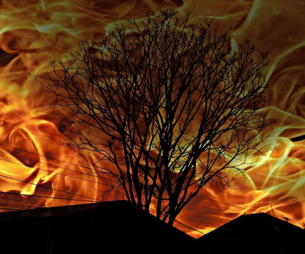 The tree is on fire now !! Or i am .. Always Editing Pics Like That! But I Like It!