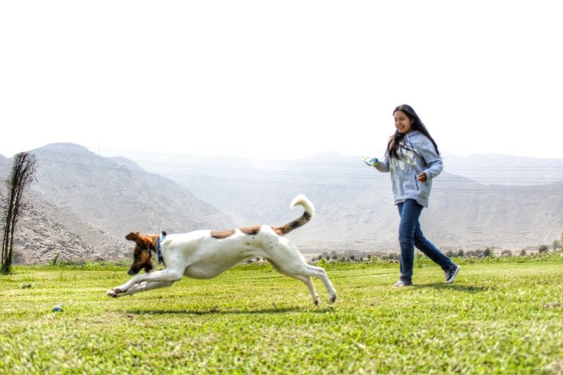 Dog Doglover Domestic Animals Grass Lifestyles Leisure Activity Casual Clothing One Animal Field Playing Clear Sky Grassy Young Adult Person Sunlight Pets No People Tranquility Enjoyment Day Farawayfromhome Doggie DogLove Grass Mountain