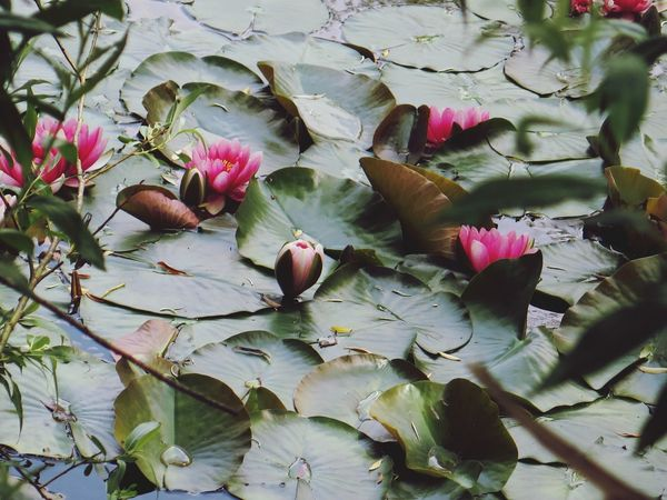 Waterlilypond Eyem Nature Lover Naturelover Beautiful Nature Nature_collection Freetime 👌