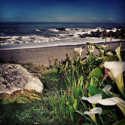Beautiful WestCoast Instabeach Ic_landscapes Ic_water Ic_flowers Fabscabe