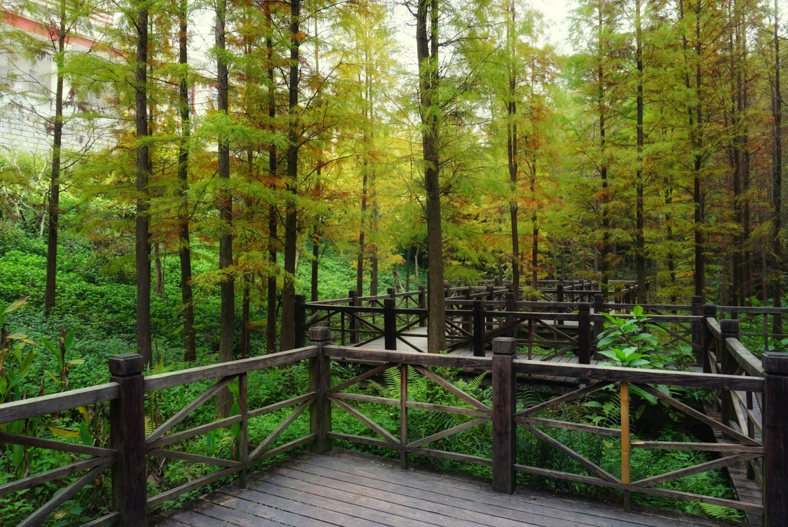 tree, forest, nature, railing, beauty in nature, no people, green color, tranquility, outdoors, day, bamboo - plant, bamboo grove