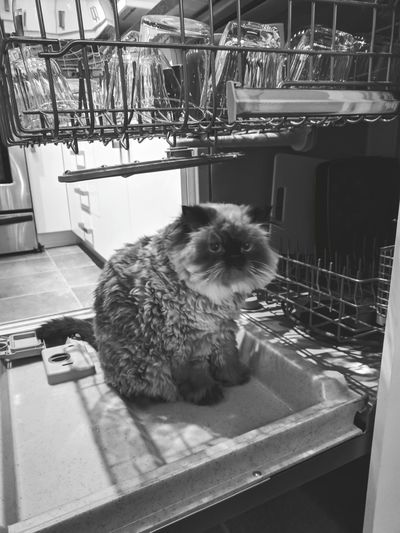 Cat Cats Of EyeEm Dish Curious Cat Curiosity More Dishes Comin Just Chillin' Need To Clean Justchillin Cage Pets Animal One Animal Indoors  Animal Themes No People