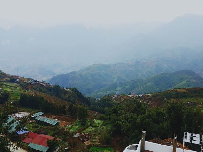 sapa Tree Mountain Forest Fog Sky Mountain Range