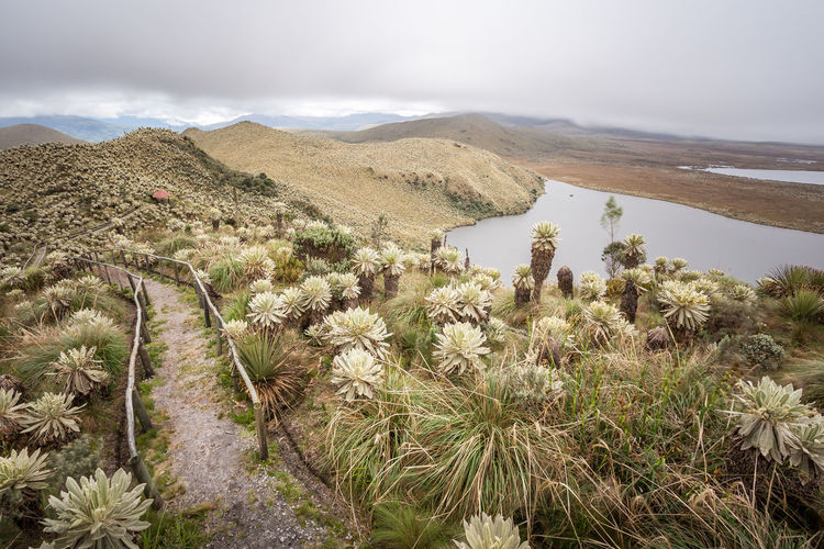 Carchi El Voladero Frailejon Road Arid Climate Beauty In Nature Day Grass Growth Lake Landscape Mountain Nature No People Outdoors Plant Sand Dune Scenics Sky Tranquil Scene Tranquility Tree Lost In The Landscape This Is Latin America