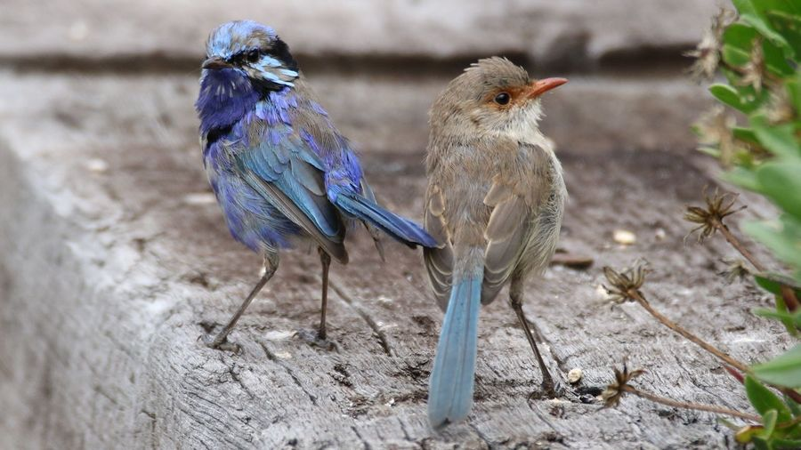 Close-up of birds perching on wood