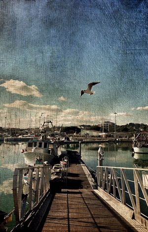 Seagull Mob Fiction EYEEM A Dreamer... IPhoneArtism AMPt_community