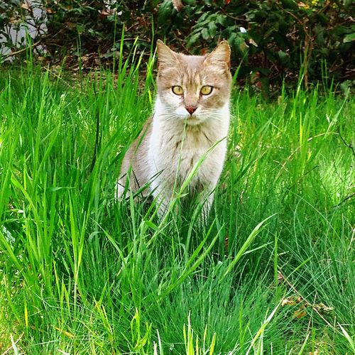 Cat Animal Nature Nature_collection EyeEm Nature Lover EyeEm Best Shots Spring Animals