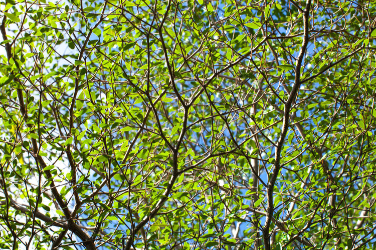 Low angle view of fresh green tree against sky