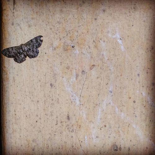 Moth Chalks On The Wall Caughtinthemoment Kohima Northeastindia Nagaland Home EyeEm Best Shots