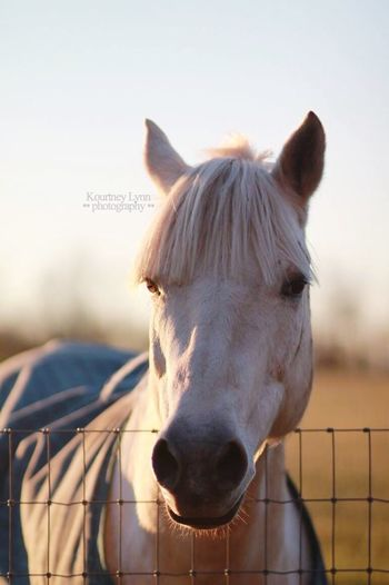 My love 🌿🦄🌍 Special Love Natural Farm Field Grey Blue Maximus 2018 Equus Equine Pony Horse Horse Animal Themes One Animal Domestic Animals Mammal Day Close-up Outdoors No People Nature Portrait Sky