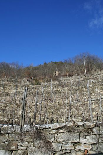 stone terraced vineyard in Langhe hills Agriculture Architecture Langhe Piedmont Italy Winter Blue Clear Sky Day Desert Landscape Nature No People Outdoors Sky Stone Stone Material Stone Terraces Stone Walls Terraced Terraced Vineyard Vineyard