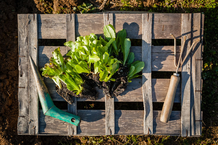 High angle view of food on plant by bench