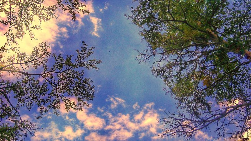 🌄⛺🌿🌿 Tree Sky Low Angle View Nature Growth Beauty In Nature No People Outdoors Tranquility Cloud - Sky Branch Close-up Day Fragility