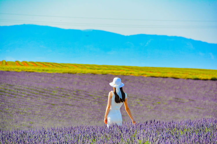 Rear View Of Standing On Lavender Field
