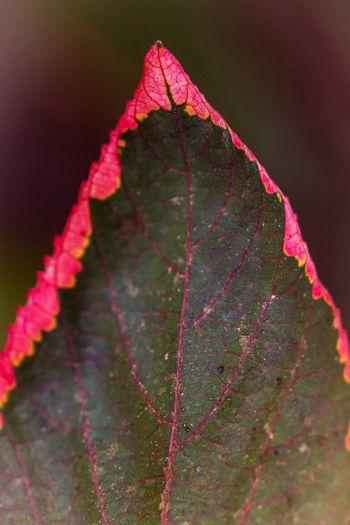 leaf 🍃🍂