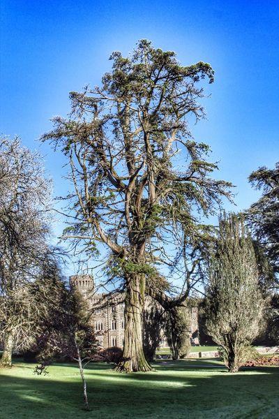 TreePorn Tree Castle