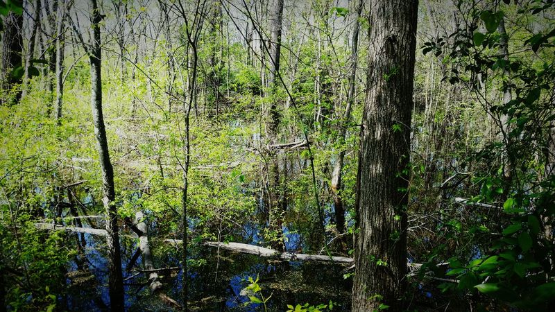 White Rock Lake Landscapes With WhiteWall Swamp Nature