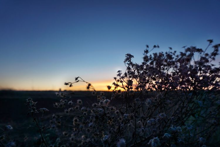 Eyemphotography EyeEm Best Edits Winter Bushes Branches Nightphotography Sunset Sunset_collection EyeEm Best Shots