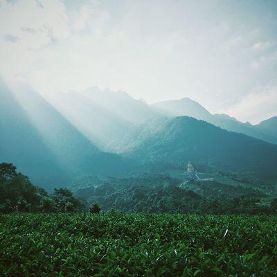 Iphonephotography Shanwei Guangdong Mountain Scenics Tea Gardens Landscape Mountain Range VSCO 一毛