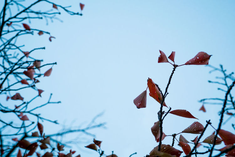 Streetphotography Street Sky Plant Low Angle View No People Close-up Focus On Foreground Beauty In Nature Nature Growth Tree Day Plant Part Vulnerability  Blue Clear Sky Leaf Outdoors Fragility Branch Flower EyeEmNewHere Autumn colors