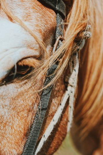 Detail shot of horse