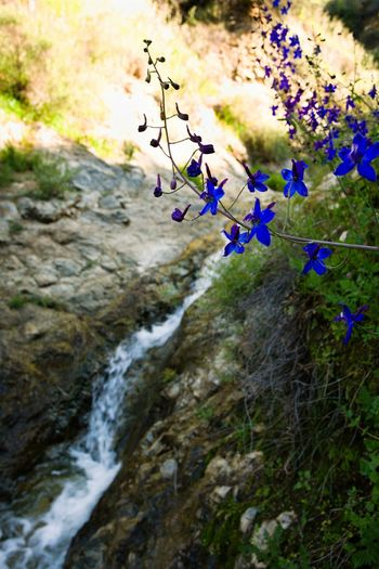 Nature Springtime Beauty In Nature Flower Outdoors No People Stream Creek Wildflowers Landscape Day Scenics Mountain Sky Freshness