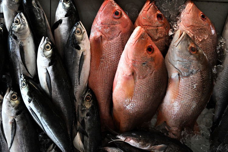 Animal Still Life Fish Seafood Vertebrate Animal Food And Drink For Sale Freshness Wellbeing Food Retail  Raw Food Healthy Eating No People Market Market Stall Close-up Indoors  Fish Market Sale Wet Market Freshness Fresh Fish Fishmonger