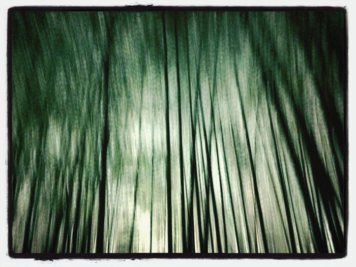 Bamboo The Illusionist - 2014 EyeEm Awards