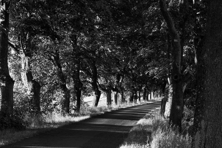 Black And White Day Masuren Masuria Mazury Nature No People Outdoors Road Shadow Tree