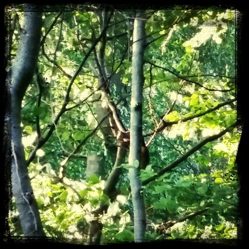 A tiny squirrel in a tree.. Nature Tree Squirrel Enjoying Life