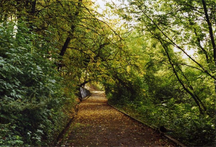 35mm Beauty In Nature Day Diminishing Perspective Footpath Forest Full Length Green Green Color Growth Leisure Activity Lifestyles Lush Foliage Narrow Nature Outdoors Plant Scenics The Way Forward Tranquil Scene Tranquility Tree Vanishing Point