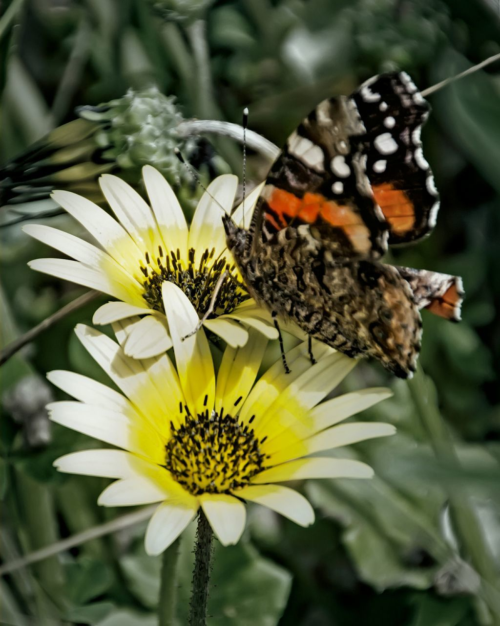 flower, insect, animal themes, fragility, animals in the wild, one animal, beauty in nature, nature, petal, freshness, plant, flower head, no people, butterfly - insect, growth, animal wildlife, pollination, day, close-up, outdoors, yellow