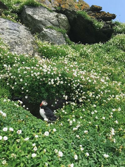 High angle view of white flowers on land