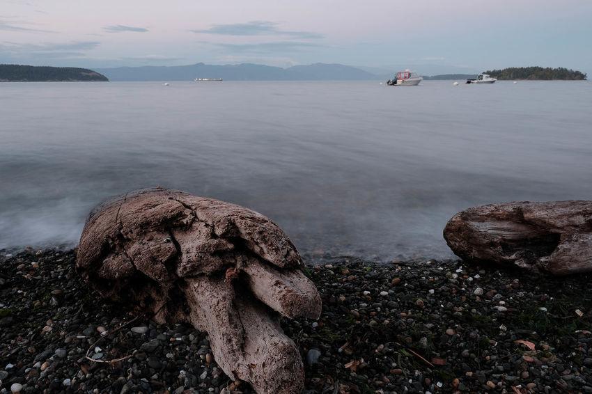 Beach Landscape Pacific Northwest  Guemes Island Driftwood