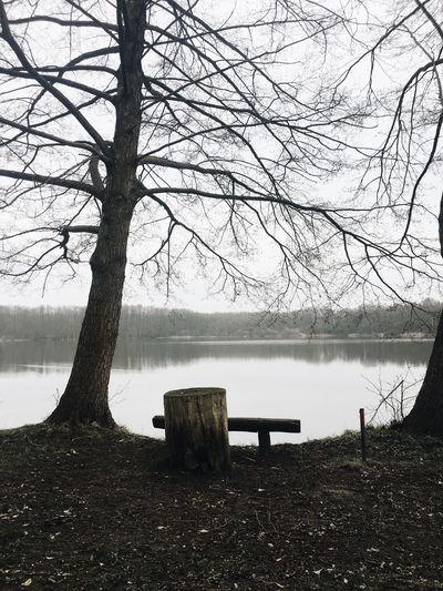 Empty bench by lake against bare trees