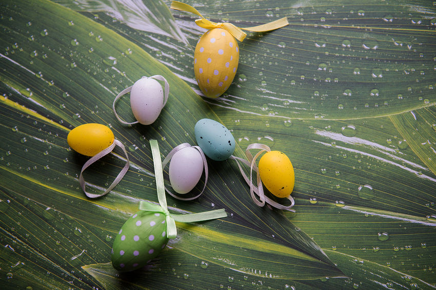 Creativity Easter Easter Bunny Easter Celebrations Easter Hunt Green Tone Images Close-up Colorful Colorfull Decorative Easter Background Easter Decor Easter Decoration Egg Eggs Flat Lay Green Color Green Tones High Angle View Idea Leaf Spring Springtime Still Life