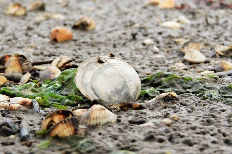 Close-up of shells on ground